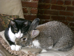 By Michelle Spaulding (Flickr: Gratuitous Cuddle Shot) [CC-BY-2.0 (http://creativecommons.org/licenses/by/2.0)], via Wikimedia Commons
