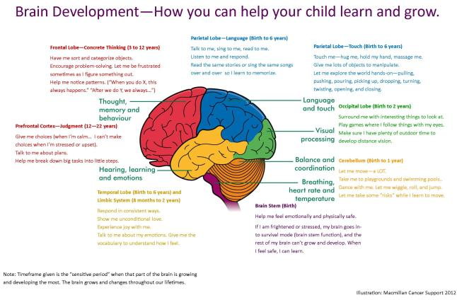 brain development and its relationship to early childhood education