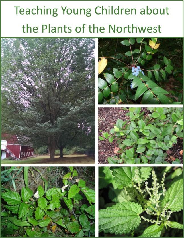 nw-plants